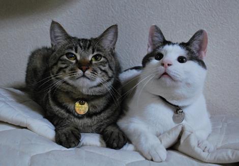 ショーン&ロビン.jpg
