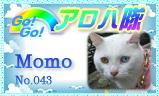 aloha-043.jpg