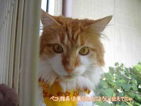 2009_0609 ねこ 0041.JPG