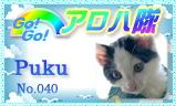 aloha-040.jpg