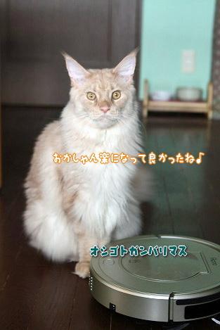 s-1709106619.jpg